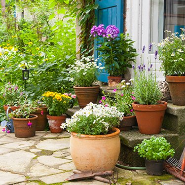 Gardening Ideas For Front Of House