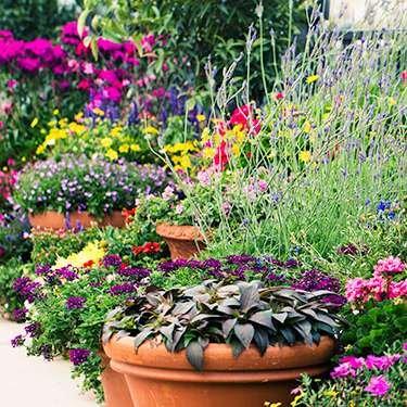 Garden Plant. Plants Garden Plant I