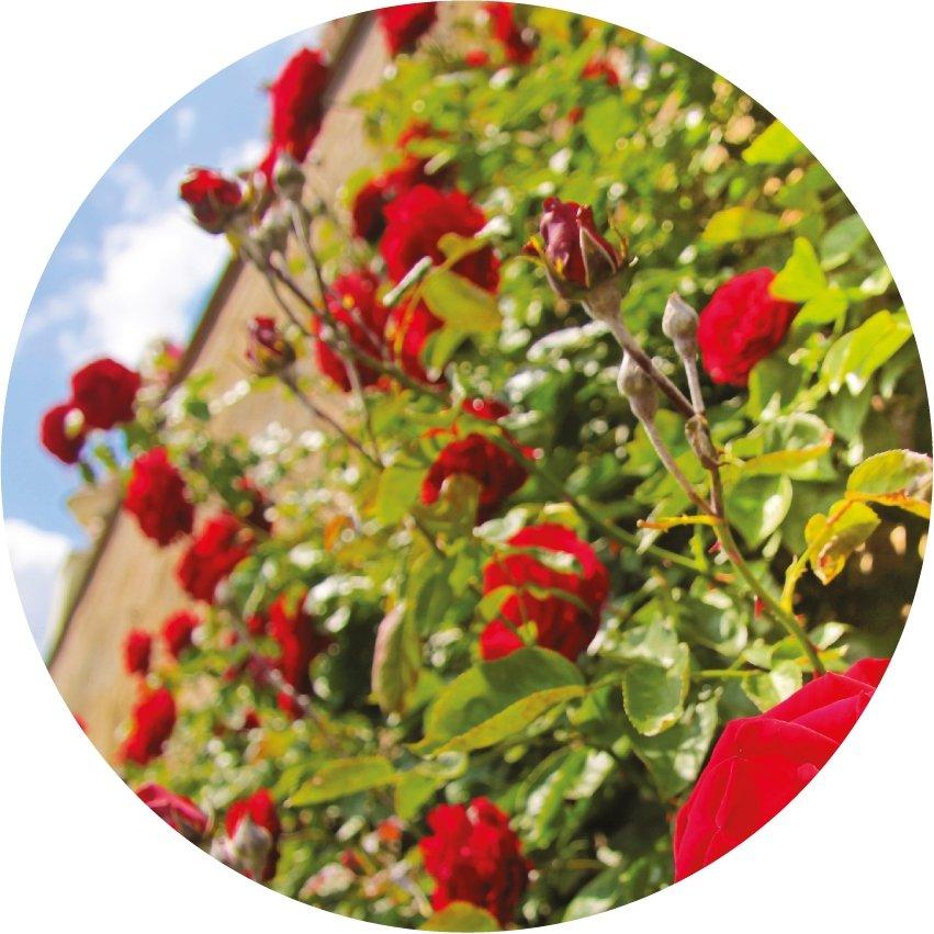 april garden tip